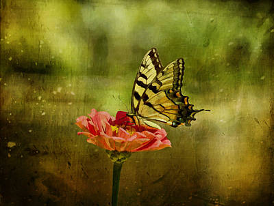 Photograph - Swallowtail On Zinnia by Sandy Keeton