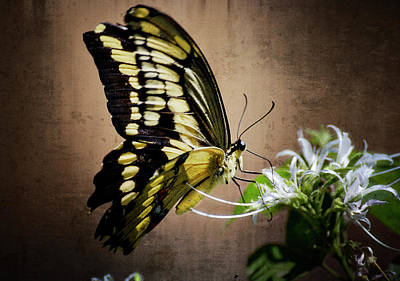 Swallowtail Art Print by Saija  Lehtonen