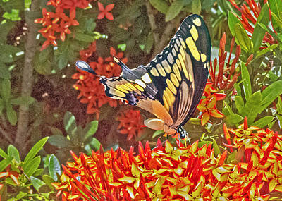 Photograph - Swallowtail by T Guy Spencer