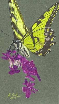 Phlox Drawing - Swallowtail With Phlox by David Cochran
