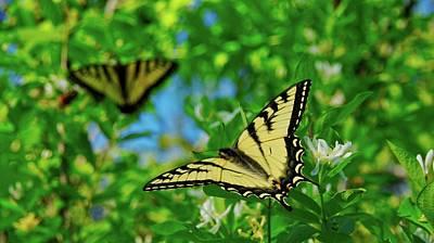 Swallowtails Art Print