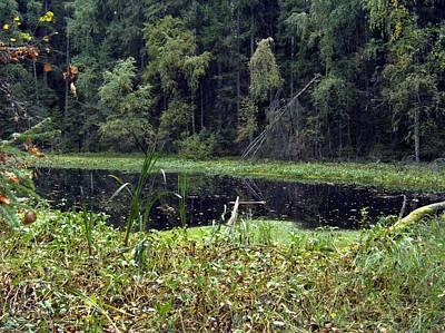 Photograph - Swamp 1 by Sami Tiainen