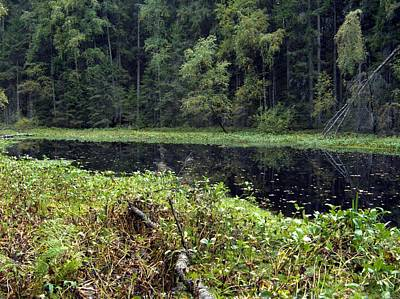 Photograph - Swamp 2 by Sami Tiainen