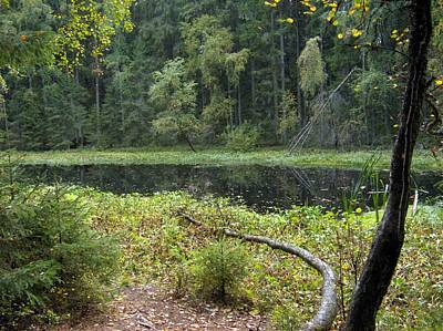 Photograph - Swamp 3 by Sami Tiainen