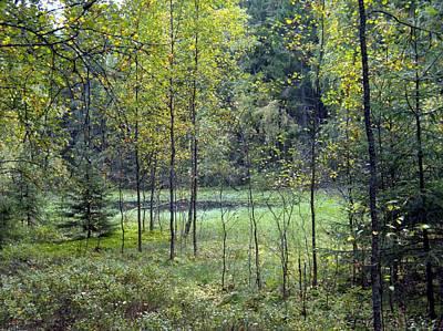 Photograph - Swamp 4 by Sami Tiainen