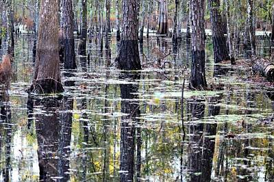Photograph - Swamp At Oxbow Trailhead by Warren Thompson