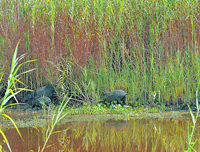Photograph - Swamp Bacon by Robert Brown