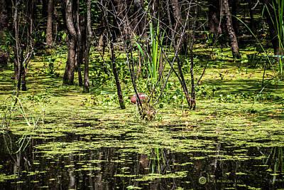 Photograph - Swamp Ball by Teresa Blanton