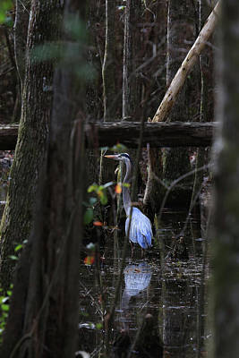 Wall Art - Photograph - Swamp Beauty by Diana Marcoux