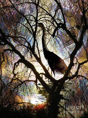 Photograph - Swamp Bird by Robert Ball