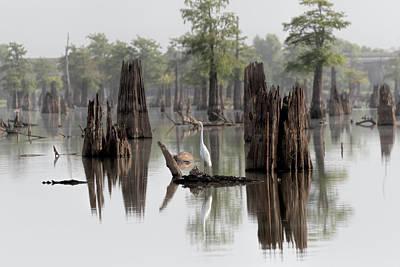 Photograph - Swamp Bird by Susan Rissi Tregoning
