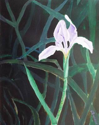 Mellow Yellow - Swamp Bloom by Gilbert Pennison