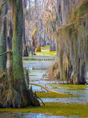 Photograph - Swamp Curtains In February by Kimo Fernandez