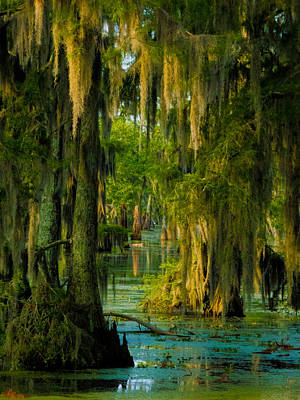 Photograph - Swamp Curtains In May by Kimo Fernandez