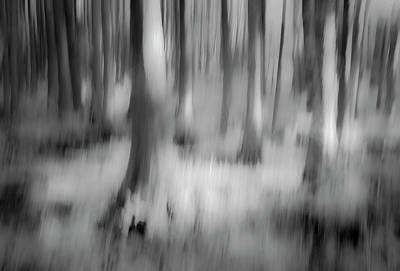 Photograph - Swamp Cypress Trees  by Gordon Ripley