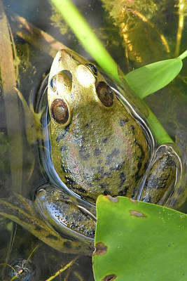Photograph - Swamp Frog by William Tasker