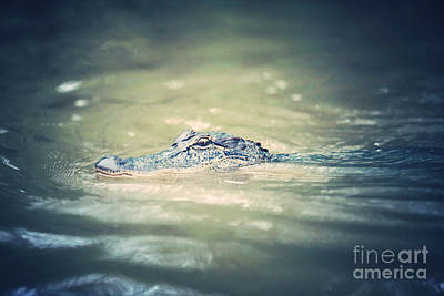 Swamp Gator Blues Art Print by Carol Groenen