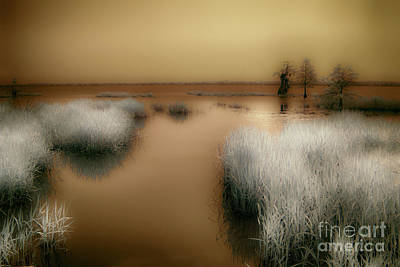 Photograph - Swamp Grass And Cypress Trees by Dan Carmichael