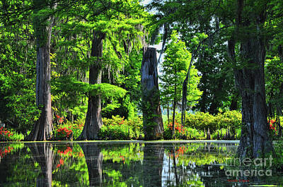 Swamp In Bloom Signed Art Print