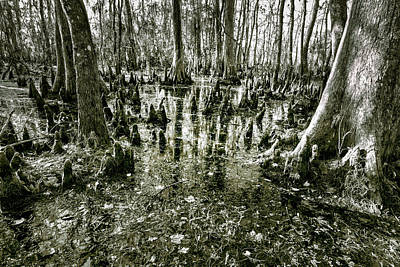 Photograph - Swamp In Contrast by Andy Crawford