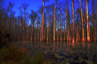 Swamp In Cypress Gardens Art Print