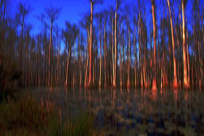 Surrealism Royalty Free Images - Swamp in Cypress Gardens Royalty-Free Image by Susanne Van Hulst