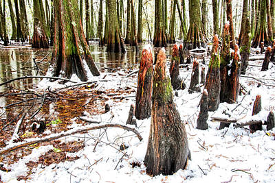 Photograph - Swamp In White by Andy Crawford