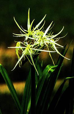 Photograph - Swamp Iris - New Orleans by Jeff Kurtz