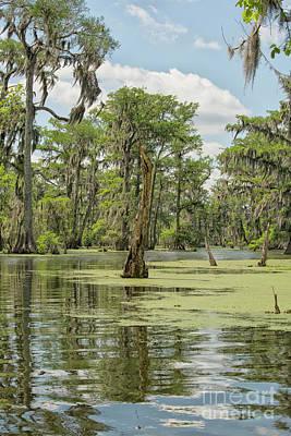 Photograph - Swamp Landscape by Patricia Hofmeester