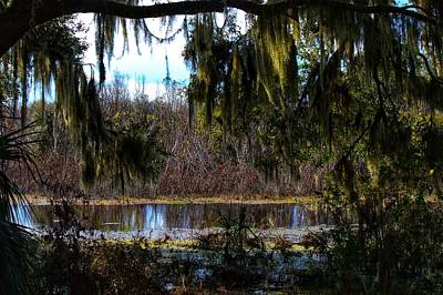 Photograph - Swamp Life by Joseph Caban