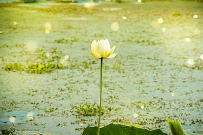 Photograph - Swamp Lily 1 by Teresa Blanton
