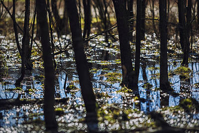 Photograph - Swamp by Mike Santis