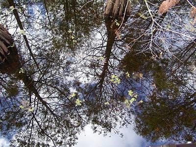 Photograph - Swamp Mirrored by Florene Welebny