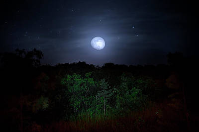 Photograph - Swamp Moon by Mark Andrew Thomas