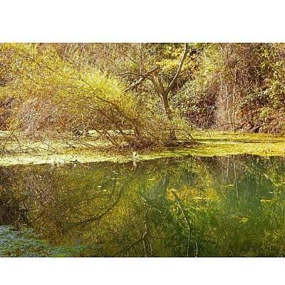 Swamp #nature Original by Vahan Hovhannisyan
