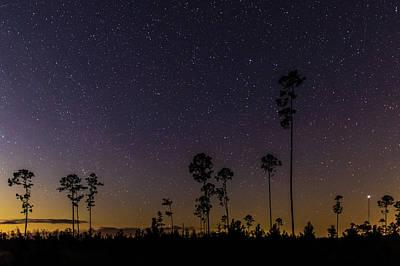 Photograph - Swamp Nightsky by Stefan Mazzola