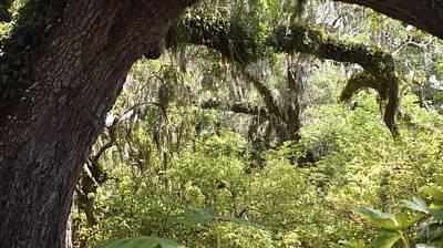 Photograph - Swamp Ogre by David and Lynn Keller