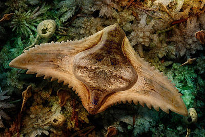 Photograph - Swamp Ray by WB Johnston