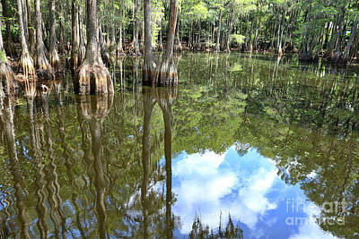 Photograph - Swamp Reflection by Carol Groenen