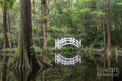 Photograph - Swamp Reflection by Jennifer Ludlum