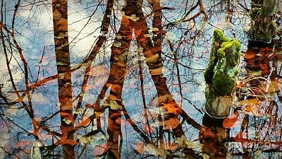 Photograph - Swamp Reflections by Beth Ferris Sale