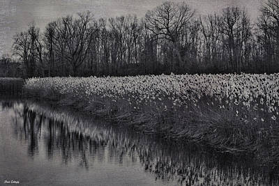 Photograph - Swamp River by Fran Gallogly