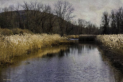 Photograph - Swamp River Scene by Fran Gallogly