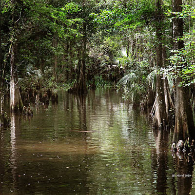 Swamp Road Art Print by Joseph G Holland