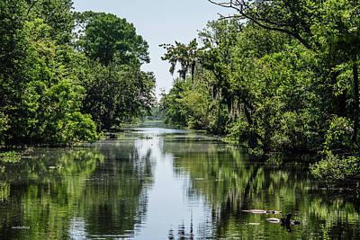 Photograph - Swamp Scene 1 by Allen Sheffield