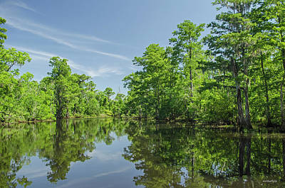 Photograph - Swamp Scene 2 by Allen Sheffield