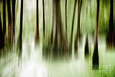 Cypress Swamp Photograph - Swamp by Scott Pellegrin