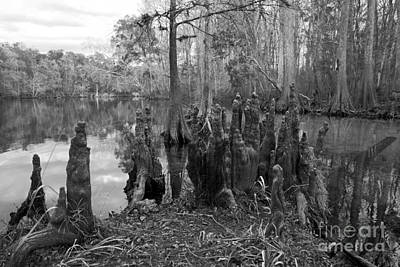 Art Print featuring the photograph Swamp Stump by Blake Yeager