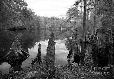 Swamp Stump II Art Print