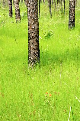 Photograph - Swamp Trees 2 by Craig Perry-Ollila